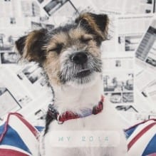Portrait of a terrier dog smiling