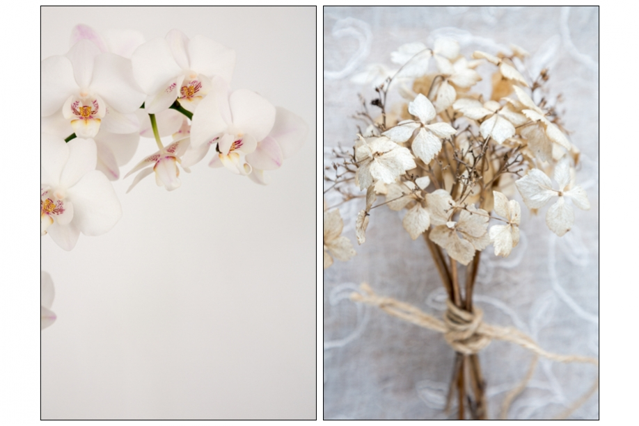 Joanne Withers Fine Art Photography Stock Images Floral